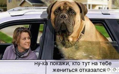 КотоВасия и собаки (22-10-2009)