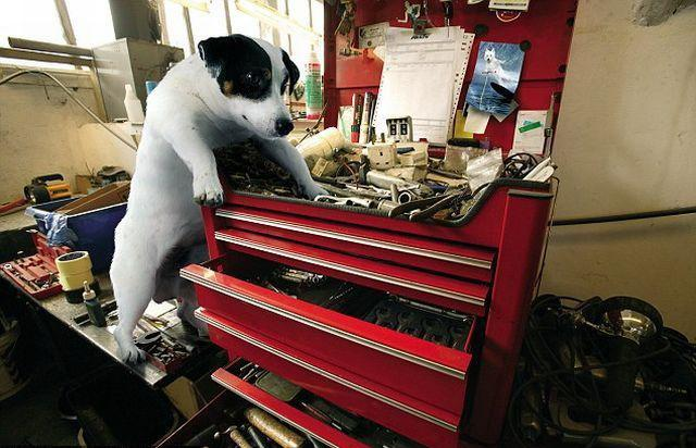 Собаки механики