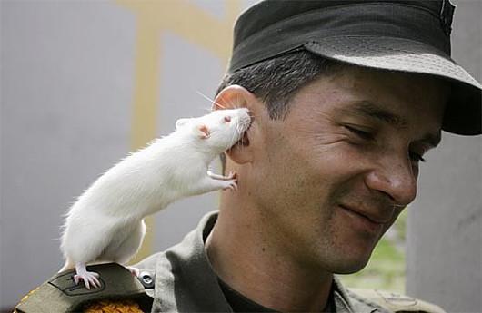 Прикольные мышки и хомячки