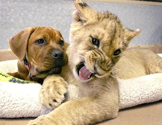 Подборка фото милых животных (22-11-2008)