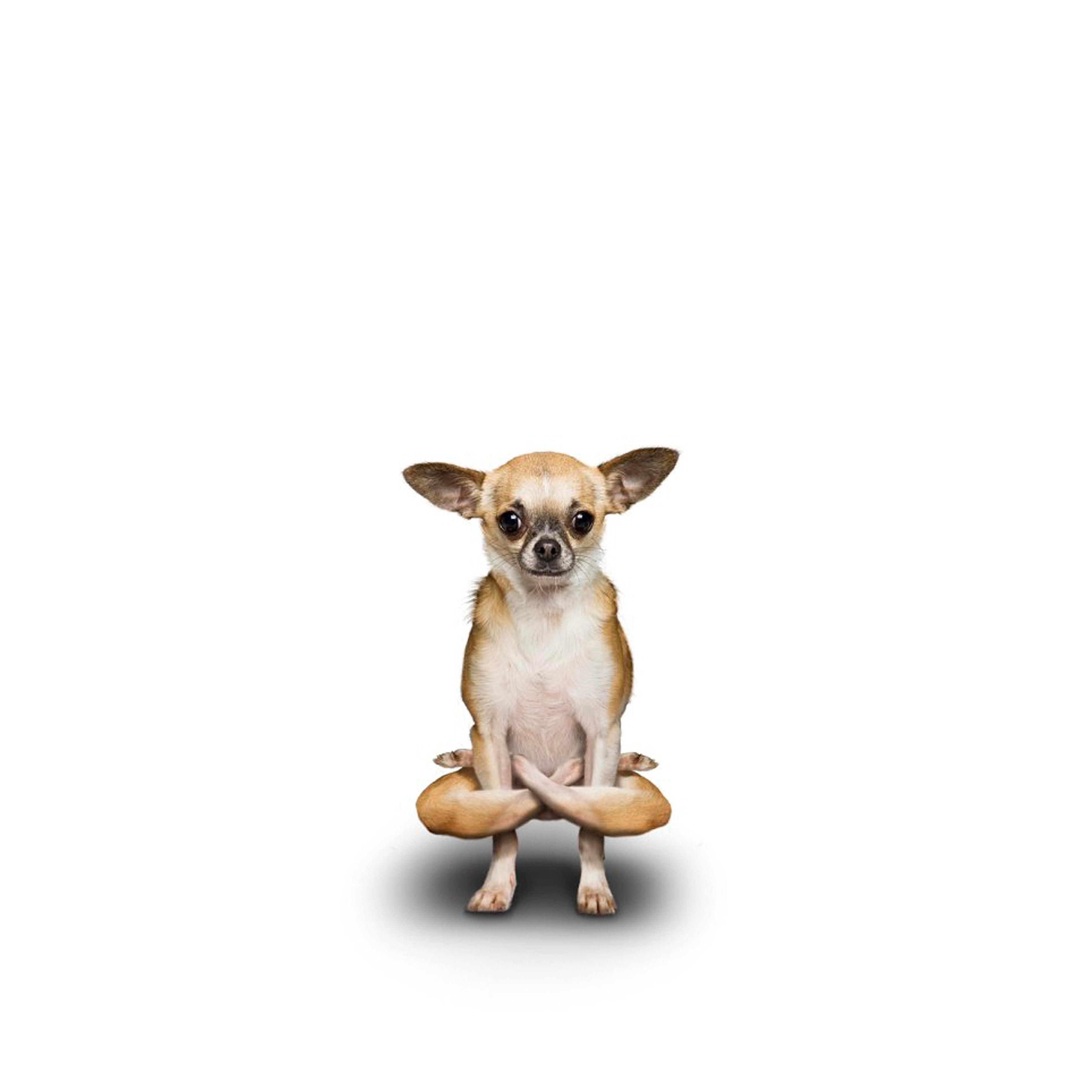 Псы Йоги - нереально позитивные фотки