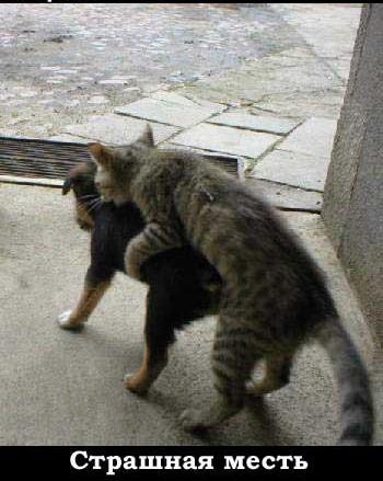 Прикольные коты (03-03-2010)