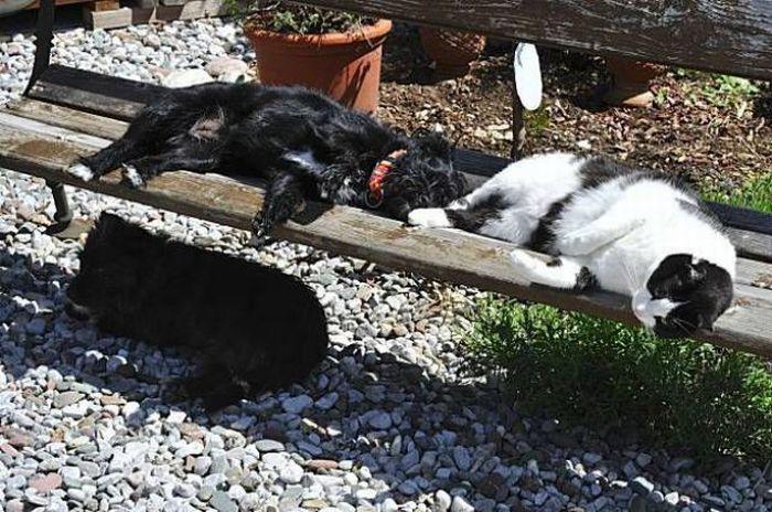 Фото подборка (29-05-2010) 115 фото