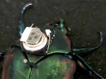 Ученые создали жуков-киборгов