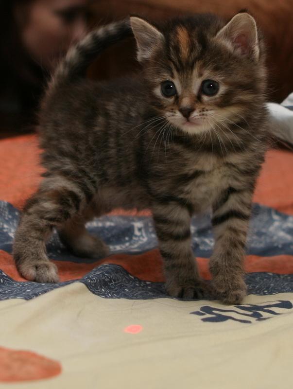 А у нас сегодня кошка родила вчера котят