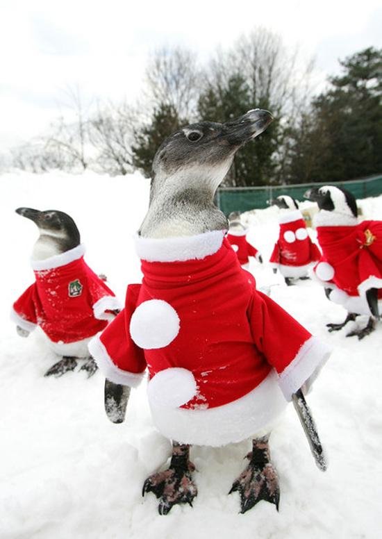 Рождество в Корее (16 фото)
