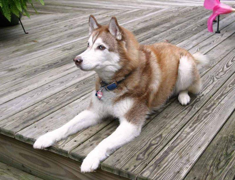 Собаки (05-01-2009)