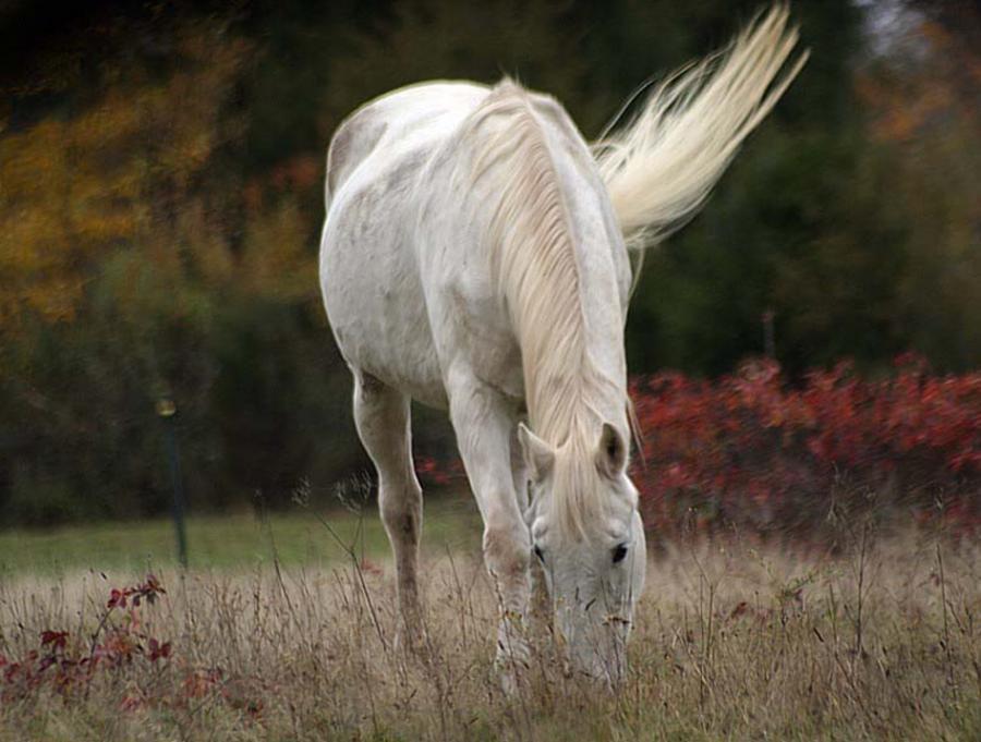 Фотоальбом Живая природа (15-11-2008)