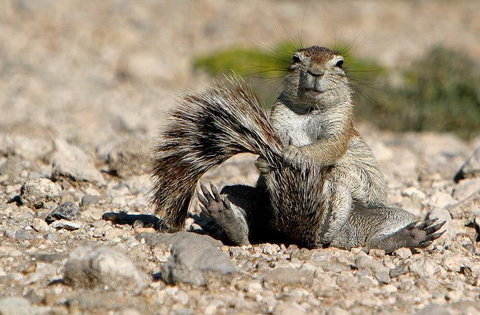 Фотоальбом Живая природа (03-12-2008)