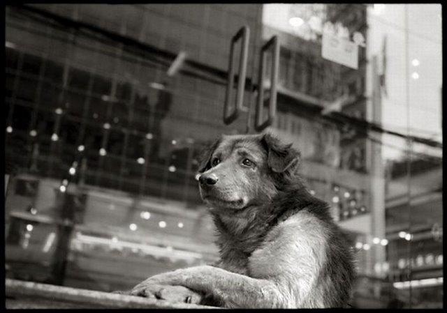 Фотоальбом Живая природа (04-12-2008)
