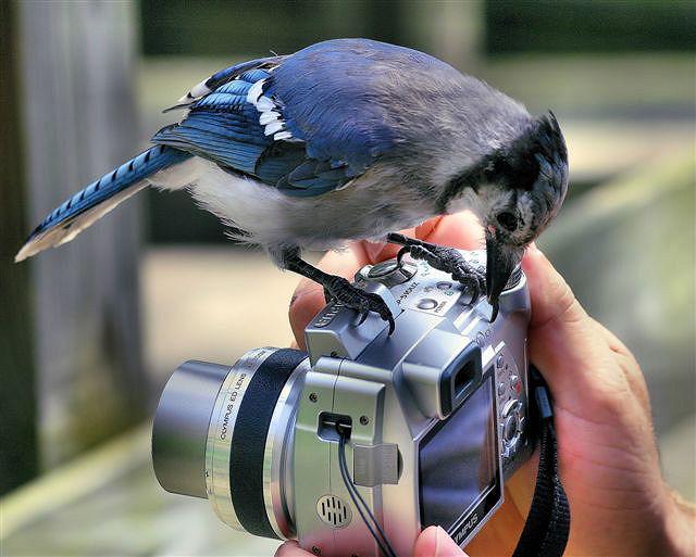 Фотоальбом Живая природа (05-12-2008)