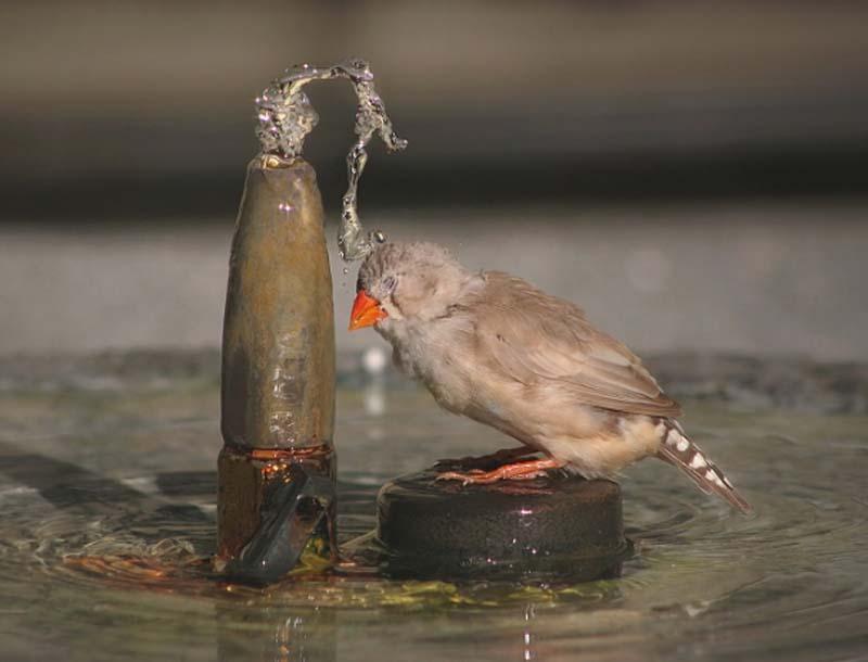 Фотоальбом Живая природа (06-12-2008)