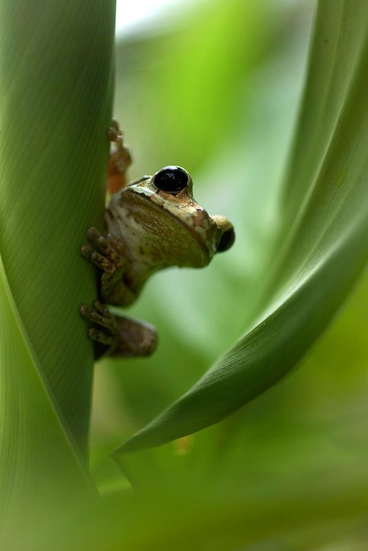 Фотоальбом Живая природа (18-11-2008)