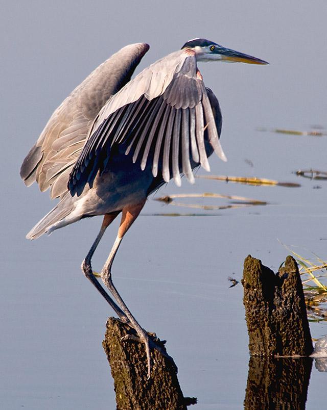 Фотоальбом Живая природа (22-11-2008)