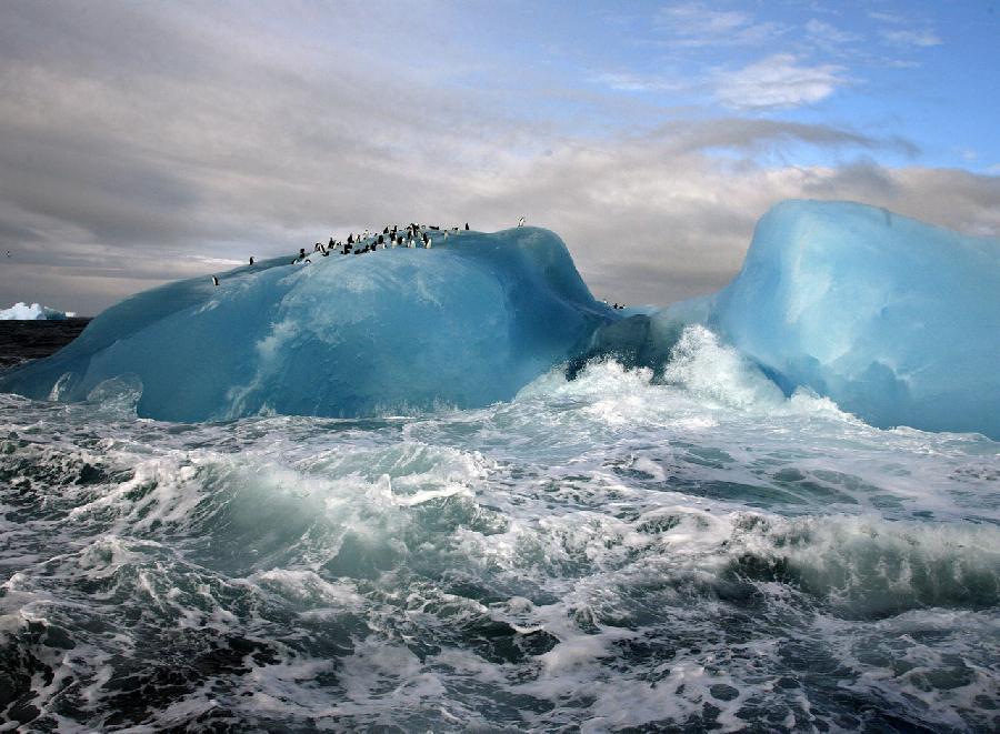 Фотоальбом Живая природа (24-12-2008)