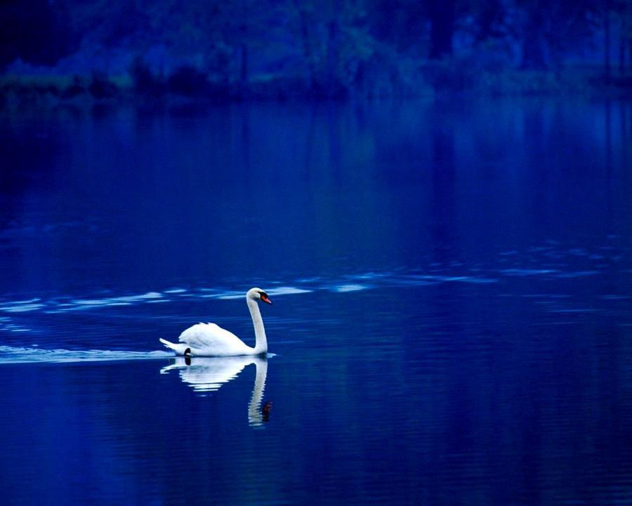 Фотоальбом Живая природа (25-12-2008)