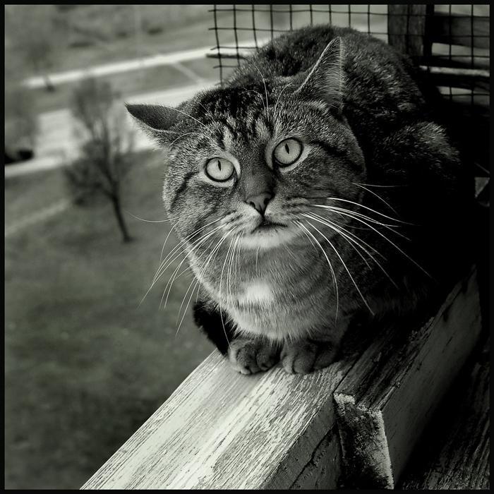 Фотоальбом Живая природа (28-12-2008)
