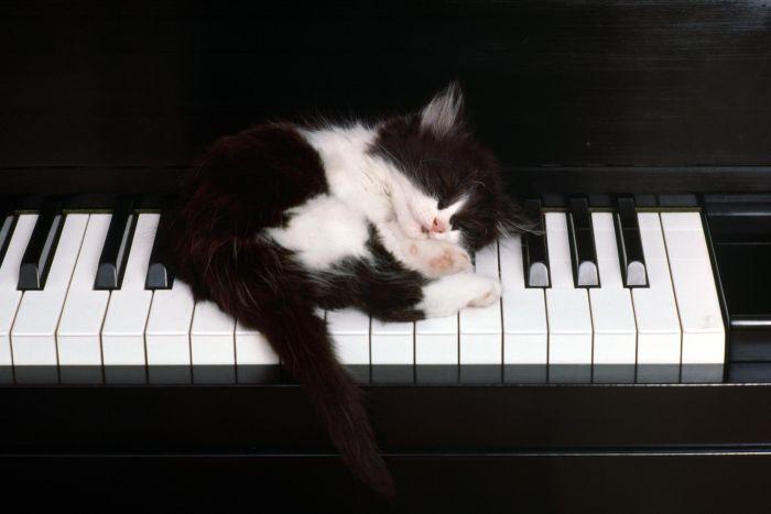 Прикольные коты. Котята (09-03-2010)