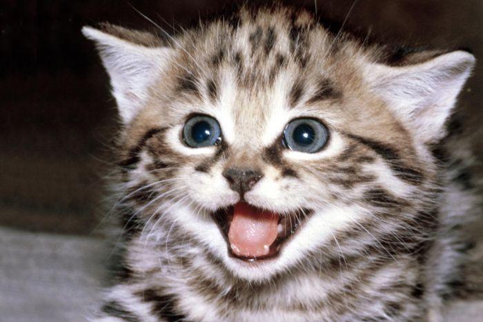Прикольные коты. Котята (09-03-2010) » Go2Load ...: go2load.com/10033-funny-cats-kittens-09-03-2010.html
