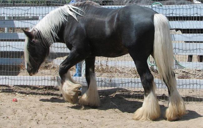 Лошади (09-03-2010)