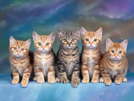 Хорошая подборка обоев с котами и кошками (03-03-2010)
