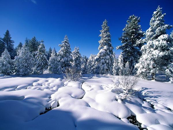 Красивые зимние обои на рабочий стол (10-01-2009)