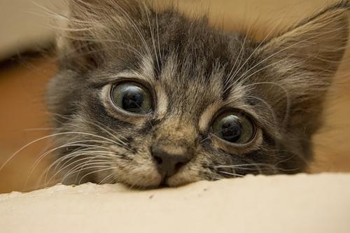 Фотосессия маленького котенка (27-11-2008)
