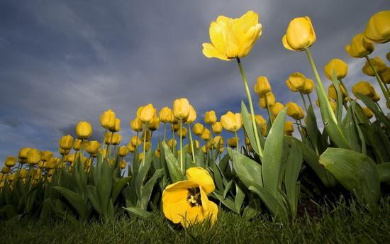 Великолепные обои и картинки природы (04-04-2010)